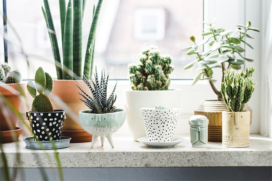 7 Ways Plants Are Supposed to Look in Your Home
