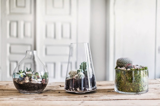 3 DIY Terrarium Ideas