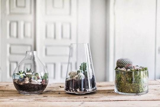 3 DIY Terrarium Ideas