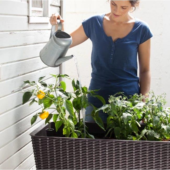 Easy Grow Planter - 5