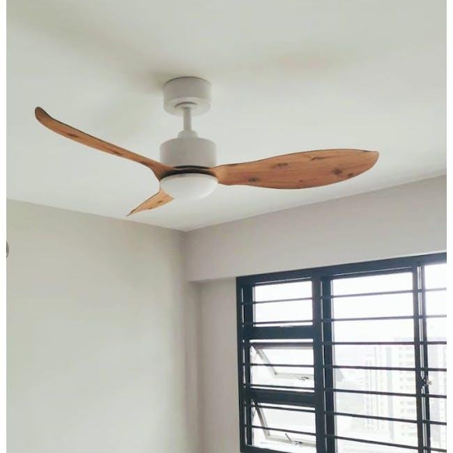F3FC White Maple Oak Decor Fan (2 Sizes) - 1