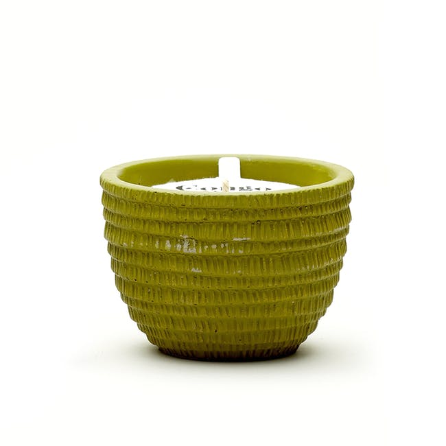 Pass It On Plantable Candles - Congo Basin - 0