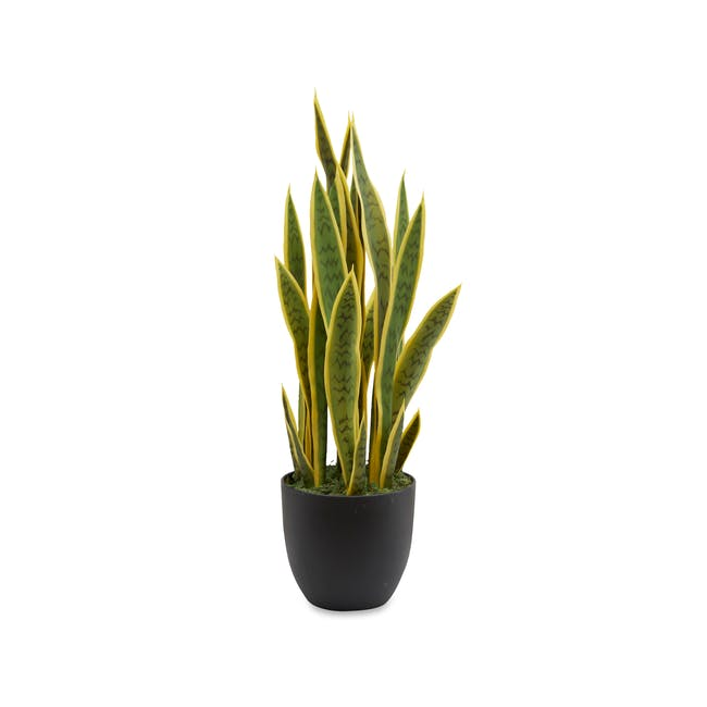 Potted Faux Snake Plant 70 cm - 0