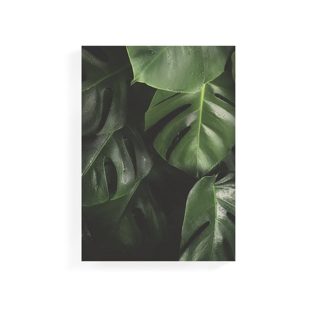 Florae Art Print on Stretched Canvas 50cm by 70cm - Monstera - 0