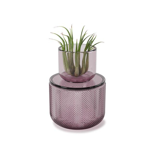 Allira Glass Organiser - Purple - 0