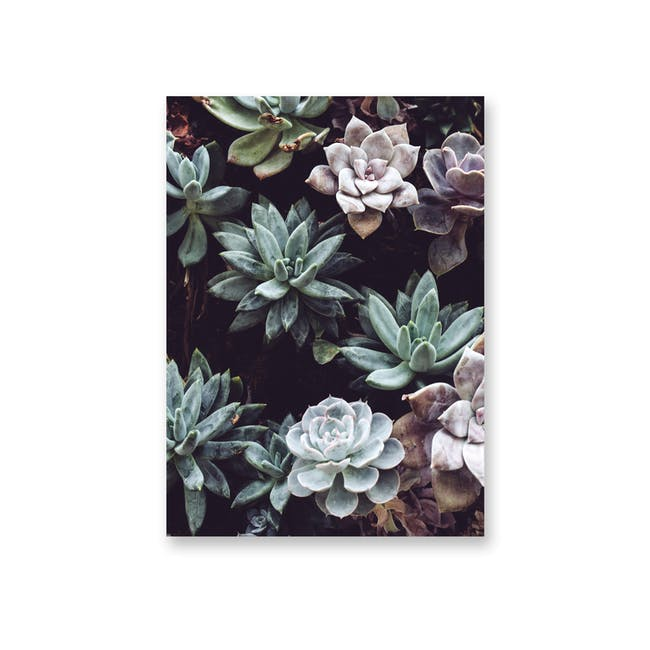 Borderless Florae Art Print on Paper (2 Sizes) - Succulents - 0