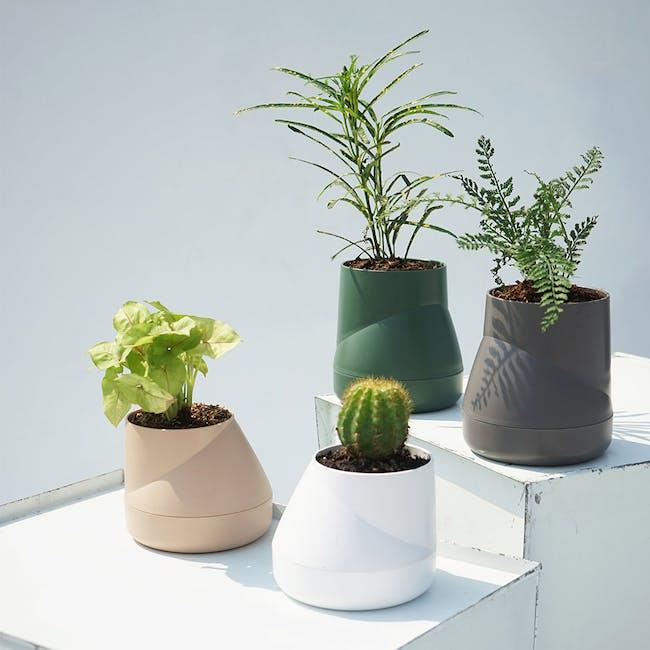 Large Hill Pot - Cream - 3