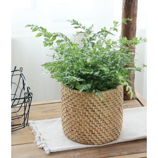 Rattan Cement Pot - Close Cane - 2
