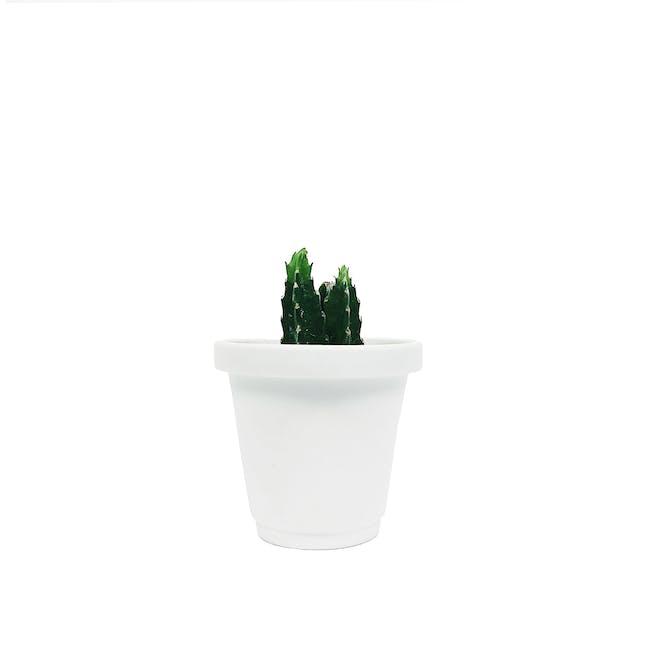 Matte Glaze Mini Plant Pot - Chalk White - 0