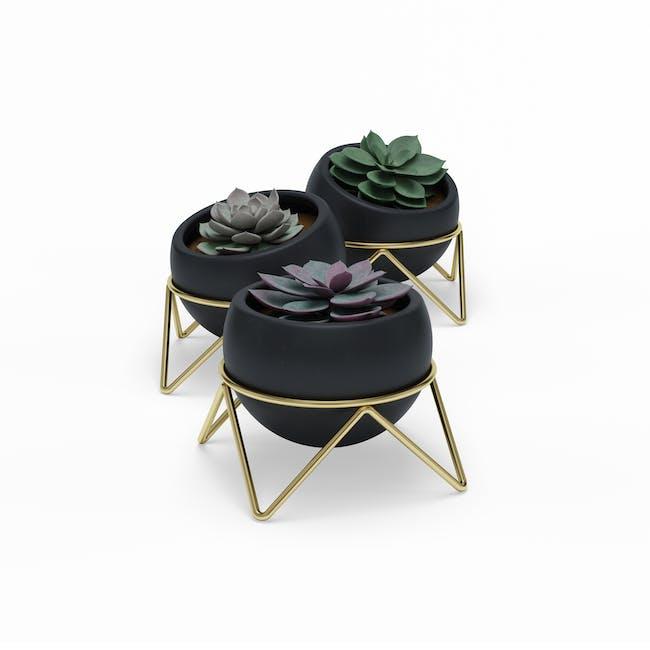 Potsy Desk Planter (Set of 3) - Black - 0