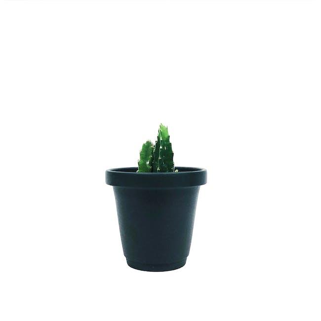 Matte Glaze Mini Plant Pot - Matte Black - 0