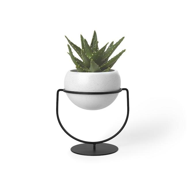 Nesta Wall & Desk Planter - 0