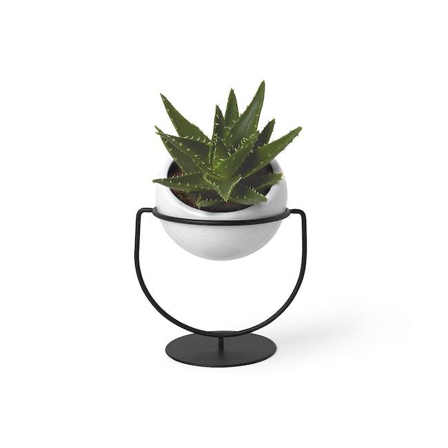 Nesta Wall & Desk Planter - 3