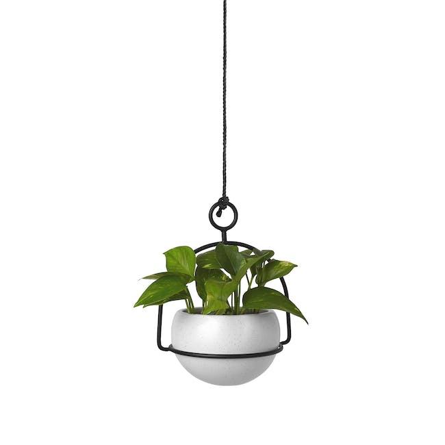 Nesta Wall & Desk Planter - 1