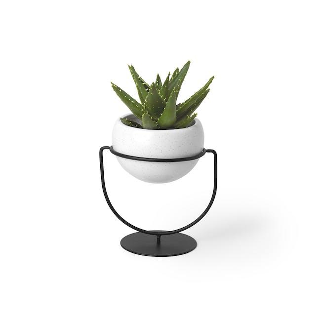 Nesta Wall & Desk Planter - 4