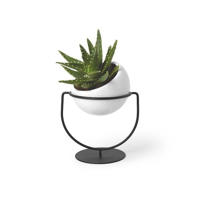 Nesta Wall & Desk Planter - 6