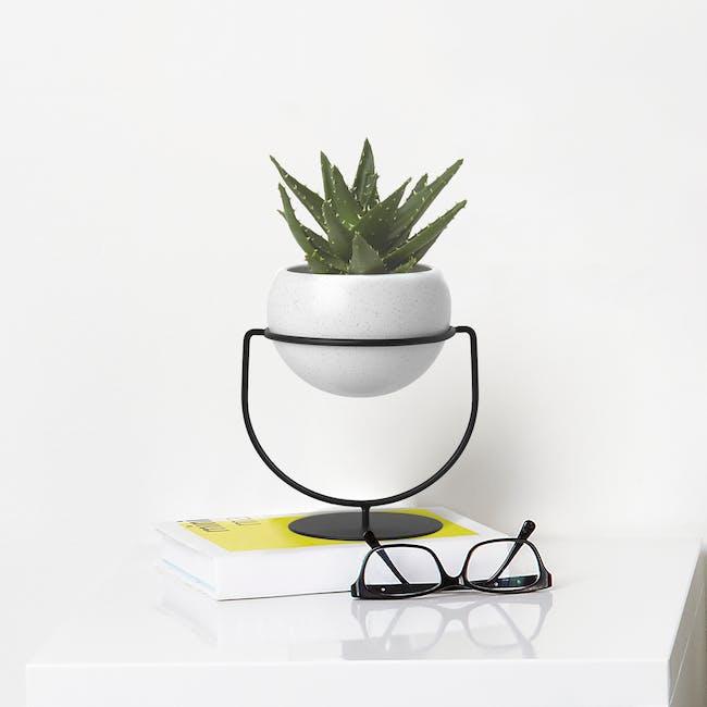 Nesta Wall & Desk Planter - 11