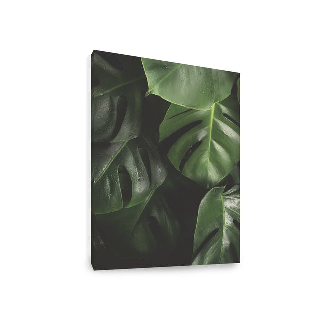 Florae Art Print on Stretched Canvas 50cm by 70cm - Monstera - 1