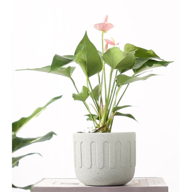 Drip Pot - White - 2