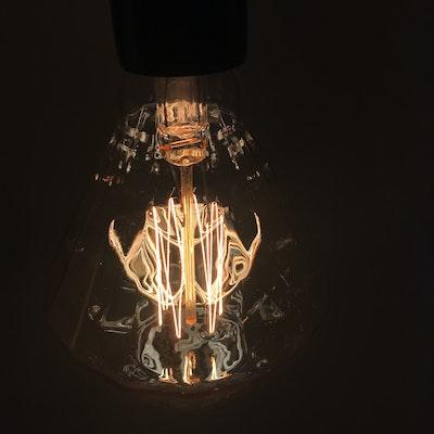 Edison Z110 Squirrel Diamond Filament Bulb - Image 2
