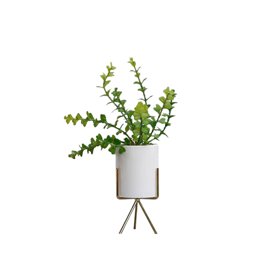 1688 - Faux Eucalyptus with Planter on Stand 32 cm- White, Brass Legs