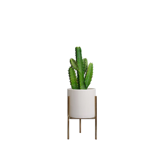 1688 - Faux Cactus with Planter on Stand 26 cm - White, Brass legs