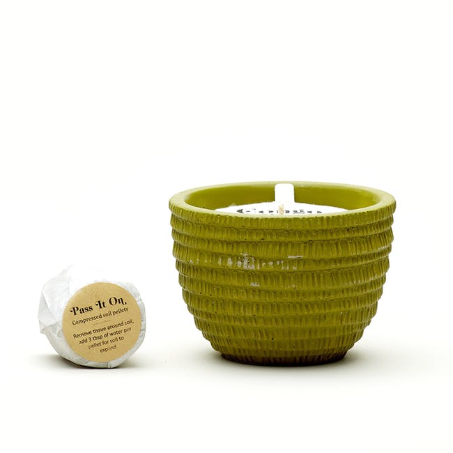 Pass It On Plantable Candles - Congo Basin - 4
