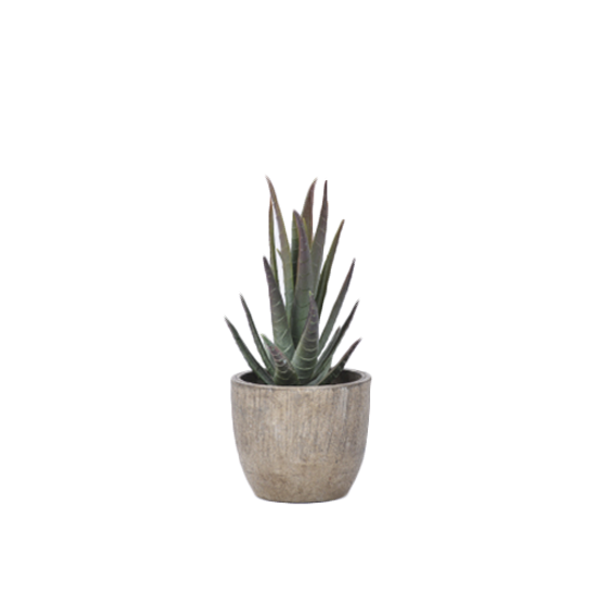1688 - Faux Aloe Plant 14.5 cm