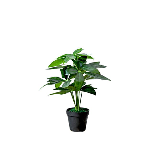 Potted Faux Pachira Money Tree 50 cm - 0