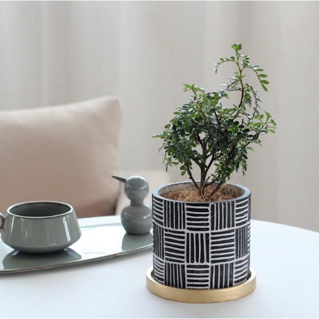 Nanno Pot with Gold Saucer - Lines - Medium - 1