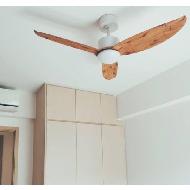 F2FC White Maple Oak Decor Fan (2 Sizes) - 2