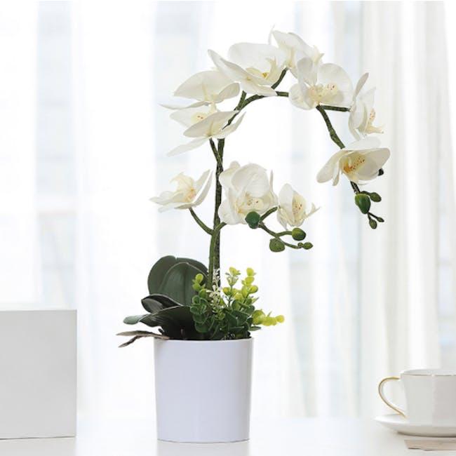 Faux Orchid - 1