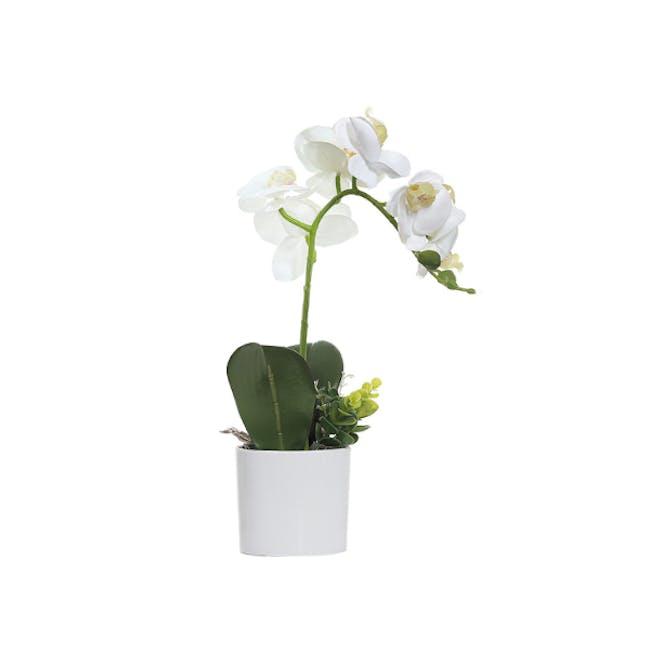 Faux Orchid - 0