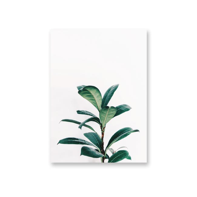 Borderless Florae Art Print on Paper (2 Sizes) - Rubber Plant - 0